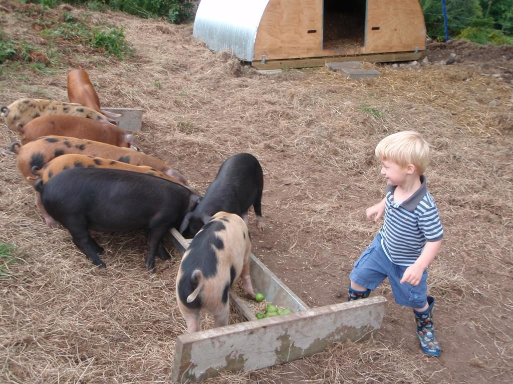 Pigs for homemade sausages - Accommodation Lyme Regis